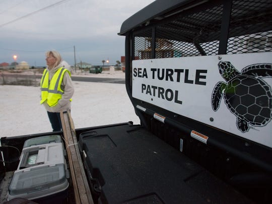 Cathy Holmes prepares to set out on sea turtle patrol on Navarre Beach Monday morning May 16, 2016. Holmes and a group of volunteers are patrolling to Navarre Beaches for signs of turtle nests that may be lost or destroyed by beach renourishment. If the volunteers find a nest before the project ends the volunteers will relocate the egg to a safe site farther down the beach.