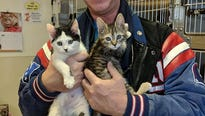 Almost 1,000 pets found new homes in 2017 at the Somerset Regional Animal Shelter