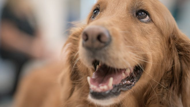 Rikki the therapy dog died just short of her 11th birthday this week.
