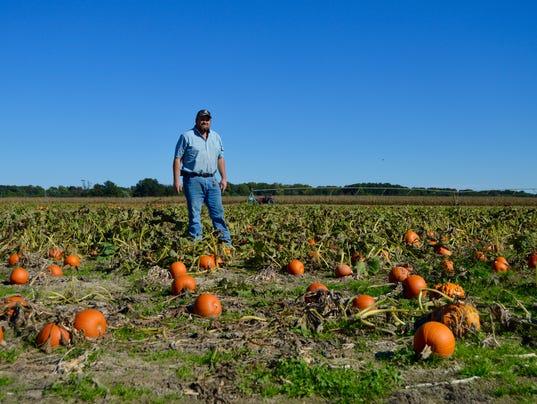 635803318350635970-20151012hc-pumpkins4