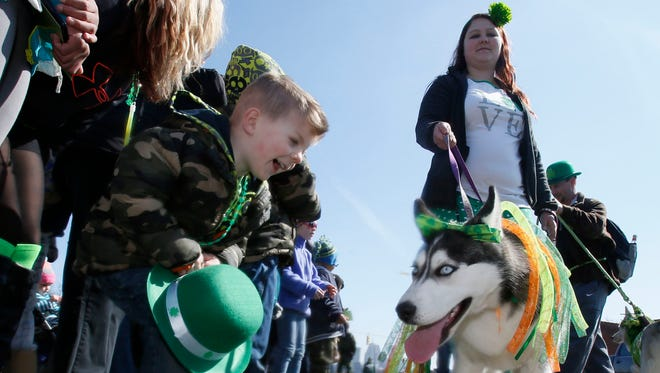 Five-year-old Tarynn Denson, with his mother Andrea and brother Jagger all from Flat Rock, gets a close look at one of the Siberian Huskies walking with the H2M2 Husky Huddle & Malamute Mingle group in the St. Patrick's Parade on Michigan Avenue in Corktown on Sunday, March 15, 2015 in Detroit.