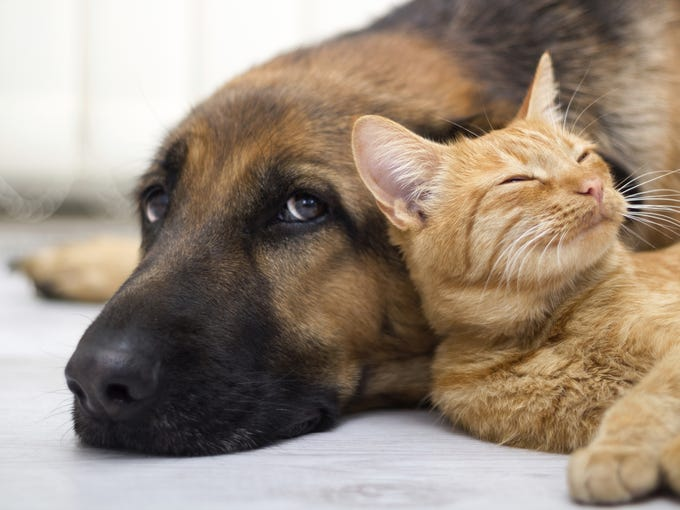 The Phoenix area is home to dozens of animal shelters,