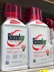 Glyphosate – the key ingredient in the popular Roundup brand – is the herbicide that is widely used for controlling many weeds.