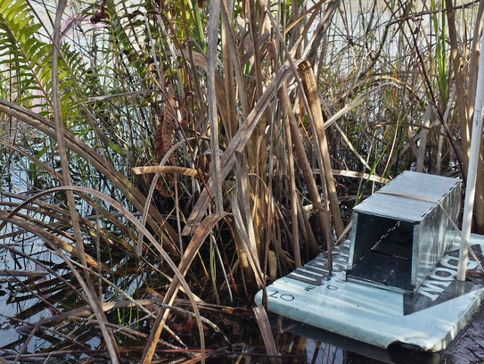 Live traps for small mammals were used in Sanibel Island's