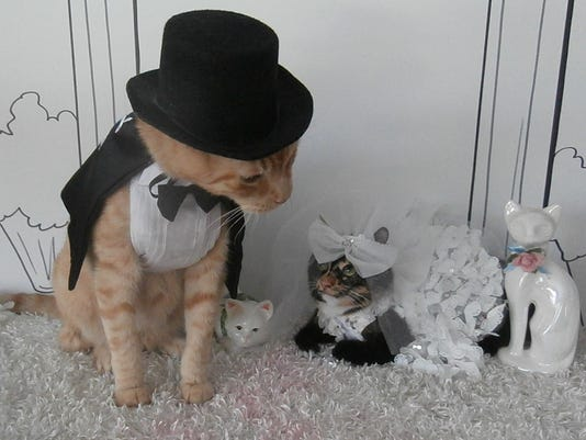 Nice day for a cat wedding cats marry for charity junglespirit Images