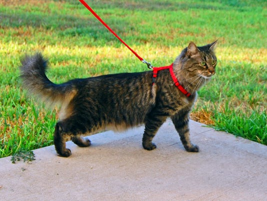 Cat-harness-and-leash.jpg