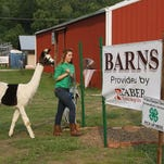 """Hailey Evans, 15, leads her lama, Spotlight, into the """"Little Hands on the Farm"""" interactive exhibit area during the Floyd County 4-H Fair in New Albany on Tuesday. (By Jenna Esarey, special to The Courier-Journal) July 1, 2015"""