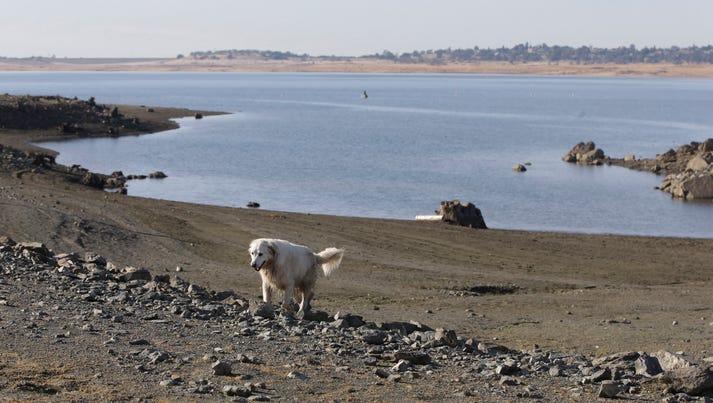 A dog walks along the receding shoreline of drought-stricken