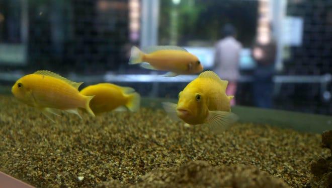 Visitors at the Belle Isle Aquarium, Americas oldest aquarium since since 1904 at Belle Isle in Detroit.