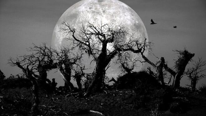 dead forest at spooky midnight under moonlight