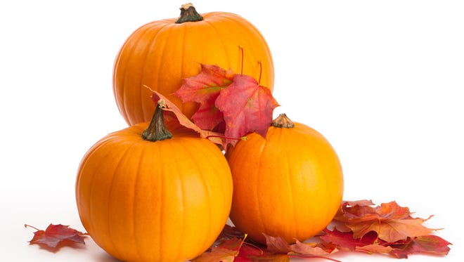 Harvested pumpkins with fall leaves on white background