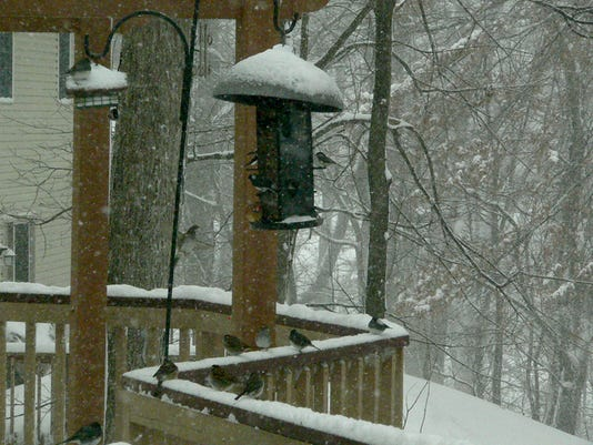 "Alan Wright of North Codorus Township submitted this photo to the YDR Weather gallery Mar. 5. Wright writes, ""Birds at the feeder on a cold winter day!"" Submitted"
