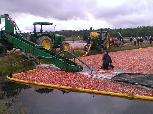 636153360155640931-Cranberries-harvest-pickup-2012.jpg