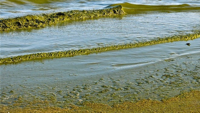 Green algae rolls onto Algoma's Crescent Beach in this file photo. The Ahnapee River, which was listed for excess phosphorus in 2014, flows into Lake Michigan just north of the beach.