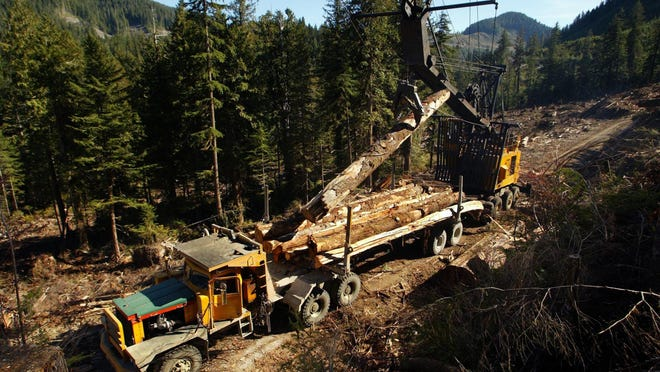 Hayes logging truck contracted to Weyerhaeuser being loaded with old growth trees from a cutblock in the Upper Walbran on Vancouver Island on October 15, 2002.