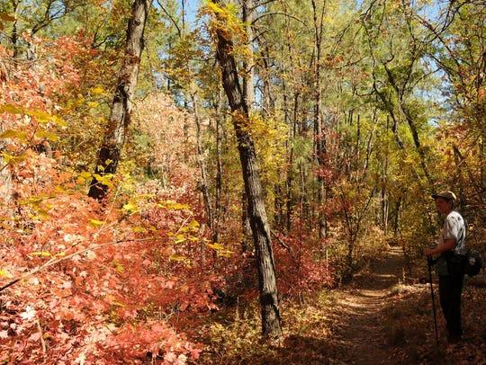 On the Boynton Canyon Trail, maple, hoptree, alder