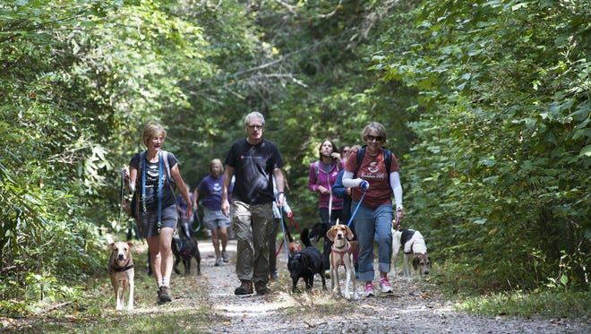 Dogs are required to be on a leash at trailheads and developed areas of Bent Creek, but it's not a requirement on the trails. In this file photo, walkers and dogs in the Outward Hounds program walk through Bent Creek.
