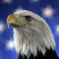 World Eagle Day is the last Sunday in March every year at the World Bird Sanctuary.