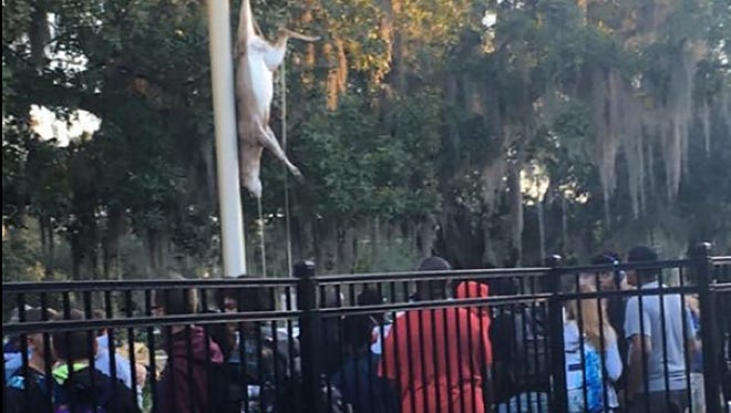 Students and faculty at Brandon High School outside of Tampa, Fla. arrived to find a dead deer hanging from a flag pole on Monday morning.