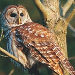 Songbirds, owls conjure thoughts of spring during doldrums of winter