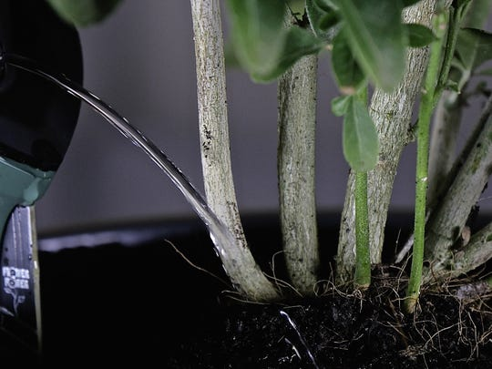 Flower Power H2O is a smart sensor that waters your plants when you're away.