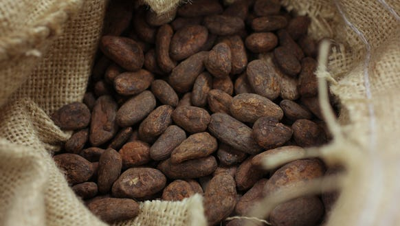 Chocolate makers start with cacao beans, such as the