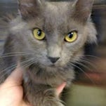 Meadow is the Current-Argus pet of the day.