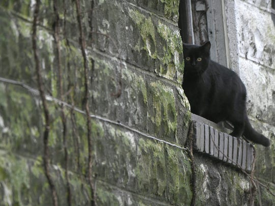 A feral cat sits on a window ledge in an abandoned building on north side of downtown Mansfield.