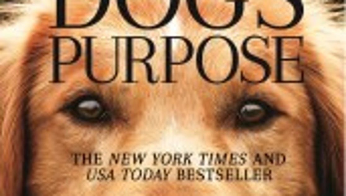 the domestication of the dog and its purpose Dogs were the first animals to be domesticated, with evidence  it found a deep  split between modern east asian dogs and those from the.