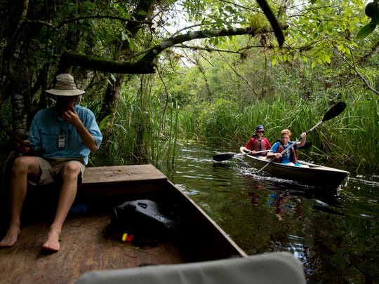 "Tourists paddle up Turner River within the Big Cypress National Preserve while tour guide Tommy Owen pulls off to the side to allow the boat traffic to pass on Friday, Aug. 5, 2016 in Ochopee, Fla. The self described ""gladesmen transplant"" gives daily tours on a glade skiff, a traditional, flat-bottomed boat used to navigate the marshes, all the while educating tourists about the culture of the gladesmen and about the environment they inhabit. ""We are the glades,"" he said. ""It's save it or let it die and we go with it."""