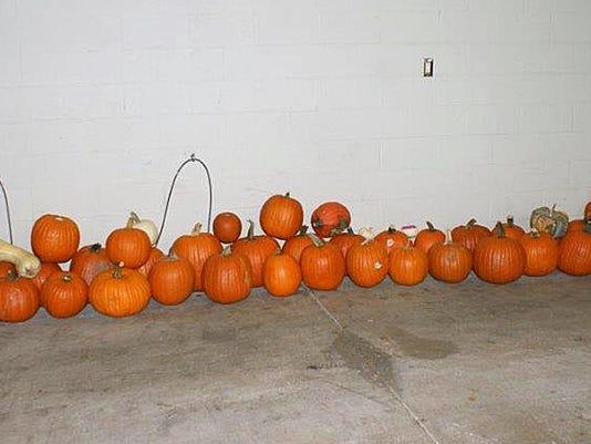 Vanishing Pumpkin Caper (2)