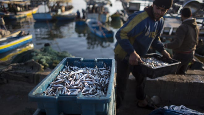 Palestinian fishermen unload their catch after a night fishing trip, in the Gaza Seaport.