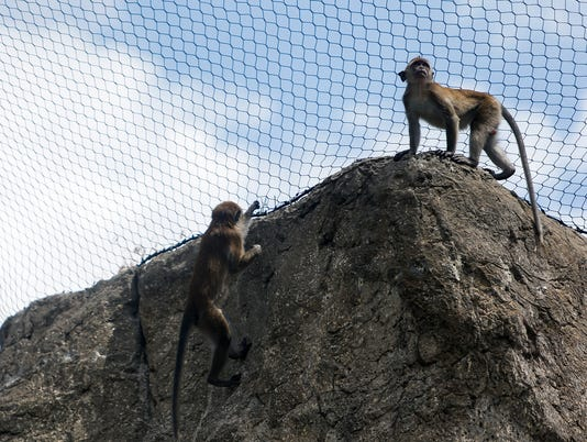 Indianapolis Zoo's new Macaques exhibit