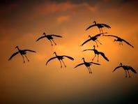 Bird watcher's paradise: 5 birding hot spots in Wisconsin