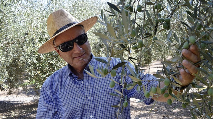Olives have become a tough business