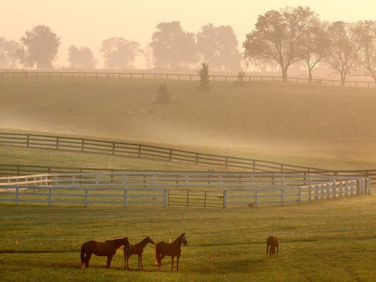 Title: Foggy Farm
