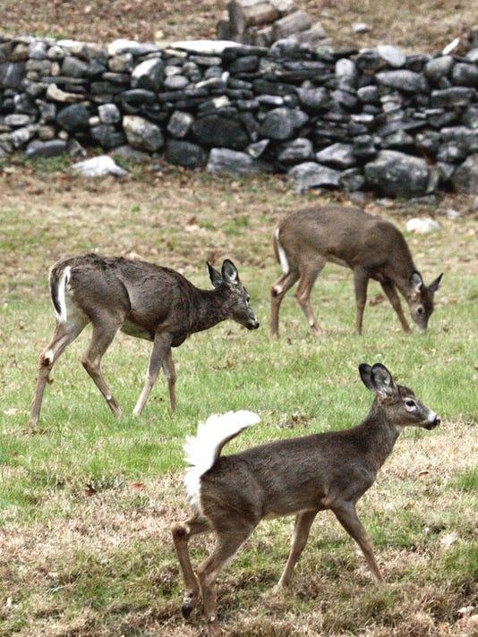 fb  deer1.jpg
