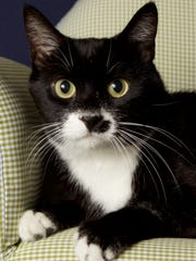 Stash is available for adoption with Friends for Life,