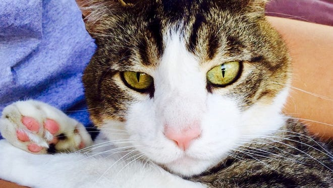 Ozzy the cat was a member of the Smith family in Visalia.