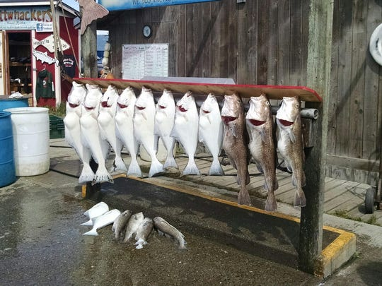 Halibut, left, and Pacific gray cod hang outside a guide service in Homer, Alaska, in mid-June. There are plenty of questions to ask and answer while planning a successful fishing trip to the frontier.