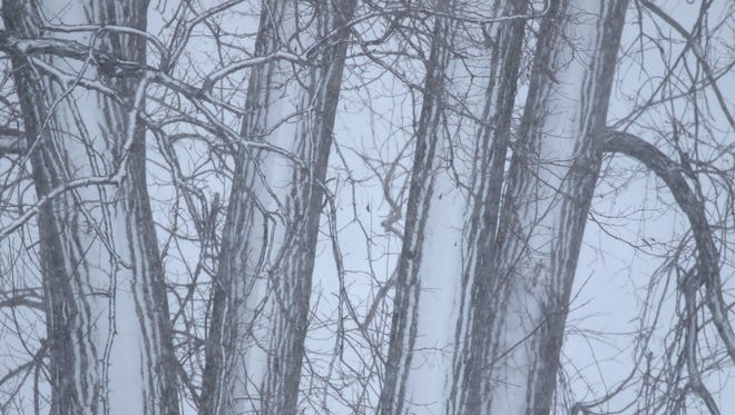 THE PHOTO:  Wind drove snow against the trees making some parts of the trees look like thin lines.  FROM TINA:  As soon as I saw this as I was driving west on Lake Avenue I pulled over and took it.  Sometimes you just can see the photo when you are driving.