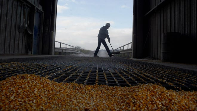 An employee of the Farmer's Elevator Co. in Pleasant Hill, Aaron Shirley, sweeping grain down a storage area in 2004.