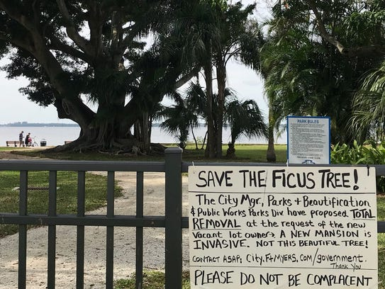 This old tree in Fort Myers' Snell Park may be spared