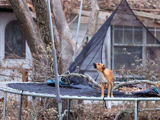 A dog barks atop a trampoline at a home damaged by