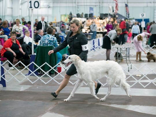 Angela Lloyd in the ring with, with Boris, a Borzoi (Russian Wolfhound) during The Celtic Classic dog show at the York Expo in York Sunday March 19, 2017.