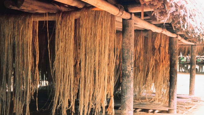 Hemp dries under a thatched roof outside the USA. The fibrous plant is used to make rope and cloth but is in the same plant family as marijuana.