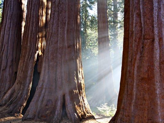 636041995287842862-Sequoia-NP-Christina-Vallianos-STE.jpg