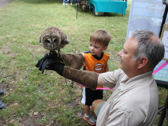 Ryles Dodd, 3, holds an owl Sunday at the Pinson Mounds Archaeofest.