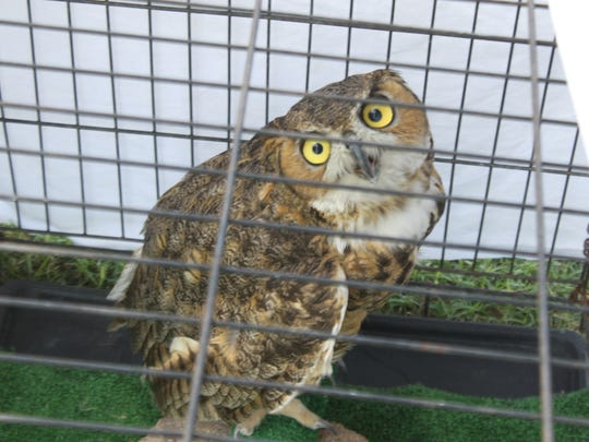An owl is on hand at a ceremony marking the $50,000 donation from The Mosaic Company to Desert Willow Wildlife Rehabilitation Center, Monday at the center.