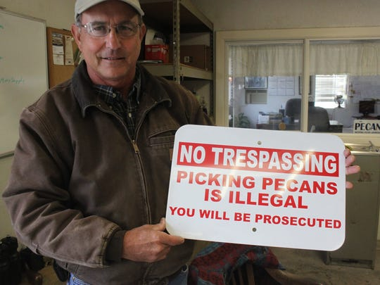 Dean Calvani discourages theft of his pecans, Oct. 31 at Calvani Farms.